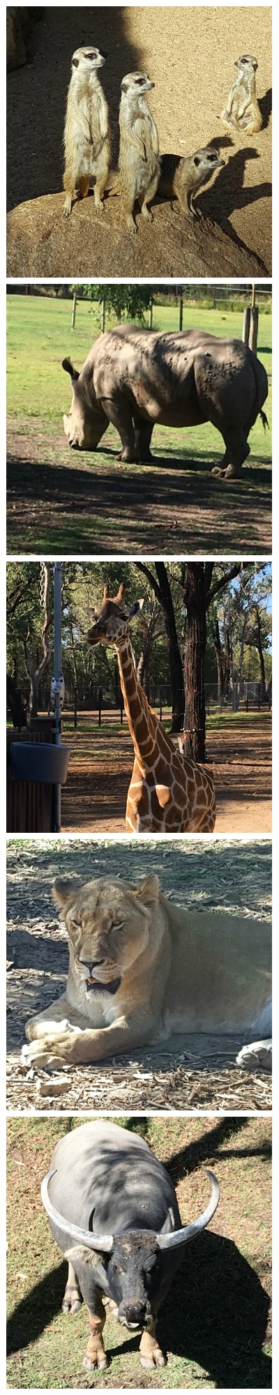 If you're looking for the best things to do while visiting Dubbo NSW you must make the Taronga Western Plains Zoo your first stop.