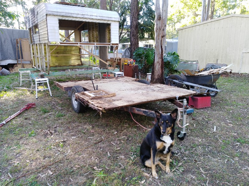 Old caravan with the body removed from the chassis. And a kelpie dog sitting out front.