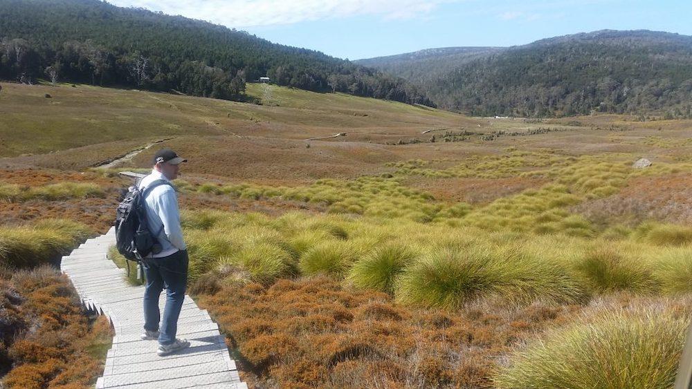 Man hiking on the boardwalk at Ronny Creek, Tasmania Australia