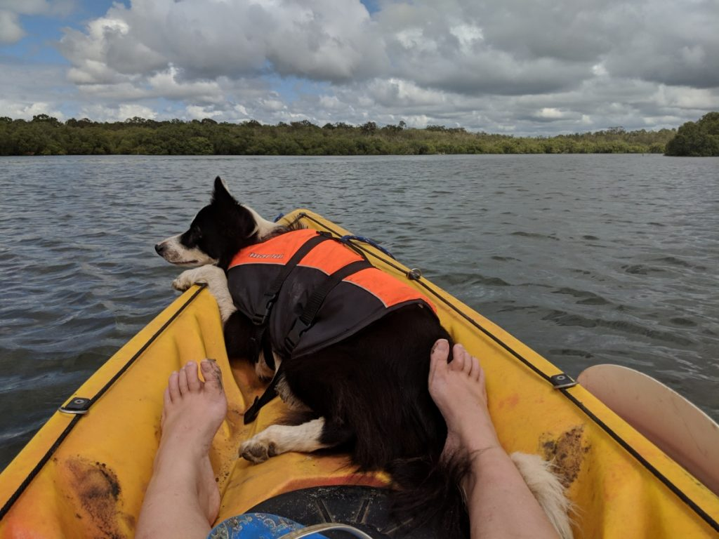 Dog wearing a life jacket sitting at the front of a kayak out on the water.